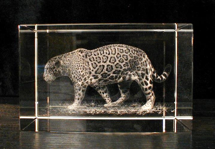Ягуар в стекле