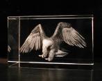 Орел в стекле