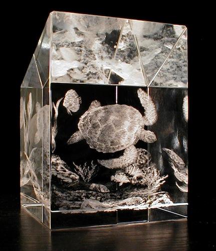 Черепаха в стекле