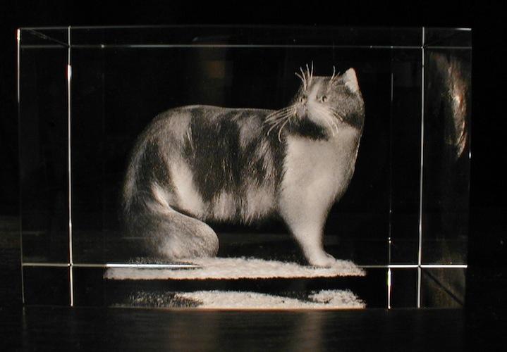 Кот в стекле