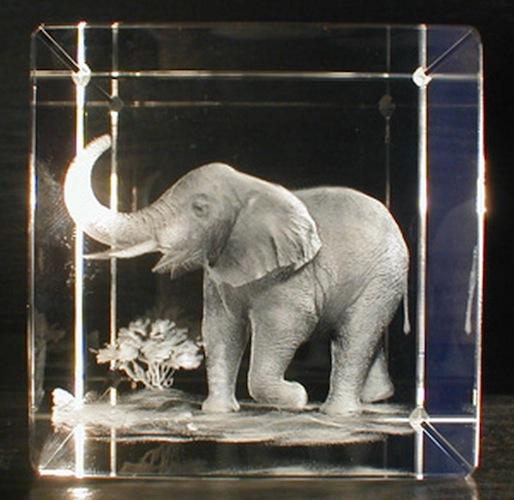 Слон в стекле