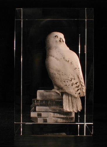 Птица на книгах в стекле
