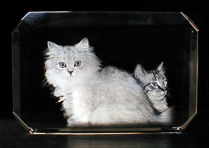 Кошки в стекле
