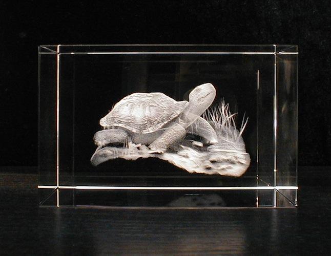 Черепашка в стекле