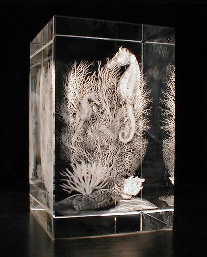 Морские коньки в стекле