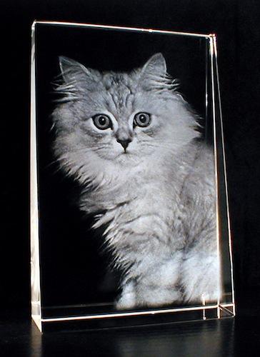 Котик в стекле