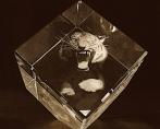 Тигр в стекле